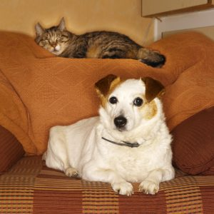 Our pet sitters and dog walkers take care of your pets in your home in the Dallas area: The Colony, Frisco, Carrollton, Plano, Addison, West Allen, Far North Dallas, Garland, McKinney, and Richardson