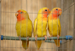 Pet sitting for birds, cats, dogs, and other pets in Dallas, TX and The Colony, Frisco, Carrollton, Plano, Addison, West Allen, Far North Dallas, Garland, McKinney, and Richardson