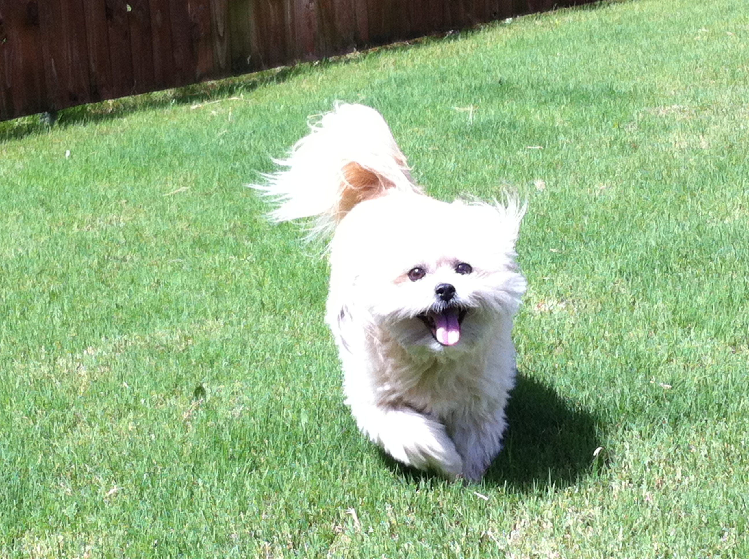 creating a dog friendly yard guardian pet sitters
