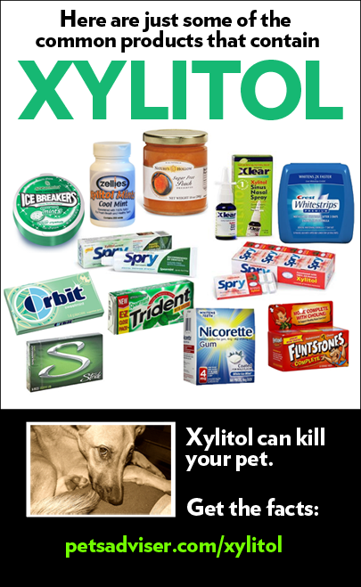 Peanut butter artificially sweetened with Xylitol is dangerous for your dog