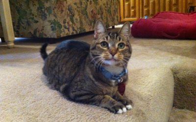 Cats and Kidney Disease