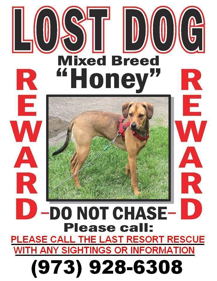 lost pet flyers