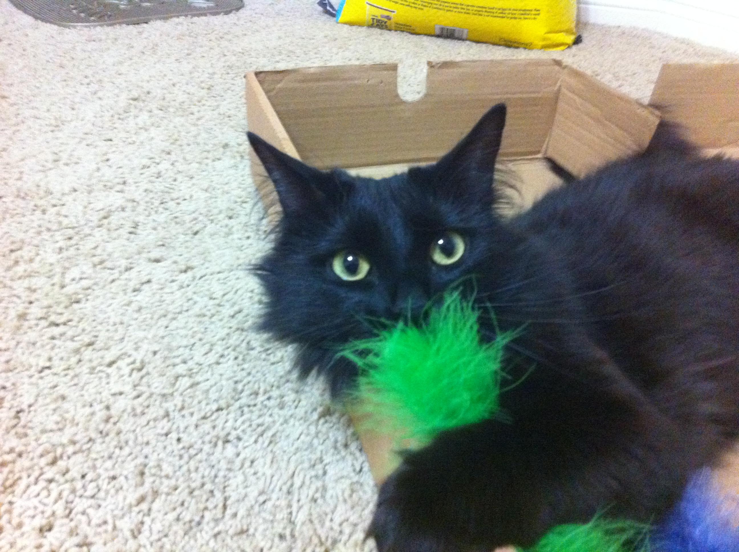 black cat 13s