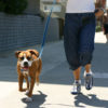 dog_walkers_carrollton_frisco