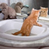 kitten_bathing