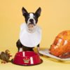 pets_thanksgiving_safety