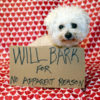 A pure breed Bichon Frise dog sits with a cardboard sign that reads WILL BARK FOR NO APPARENT REASON. Dog Shaming is a growing trend on the internet, even though the dogs don't really care.