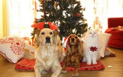 Holiday Tips for a Healthy and Happy Pet