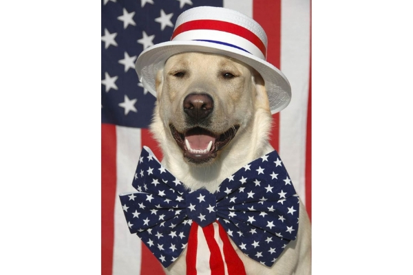 July 4th Pet Tips – Did you know the shelters say July 5th is the busiest day of the year?